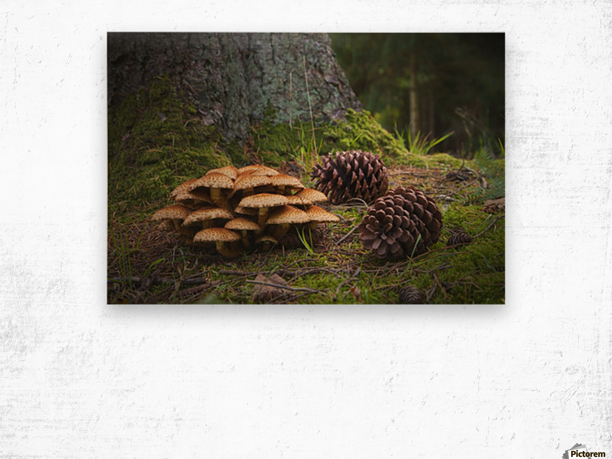 Mushrooms And Pine Cones On The Forest Floor; Northumberland, England Wood print