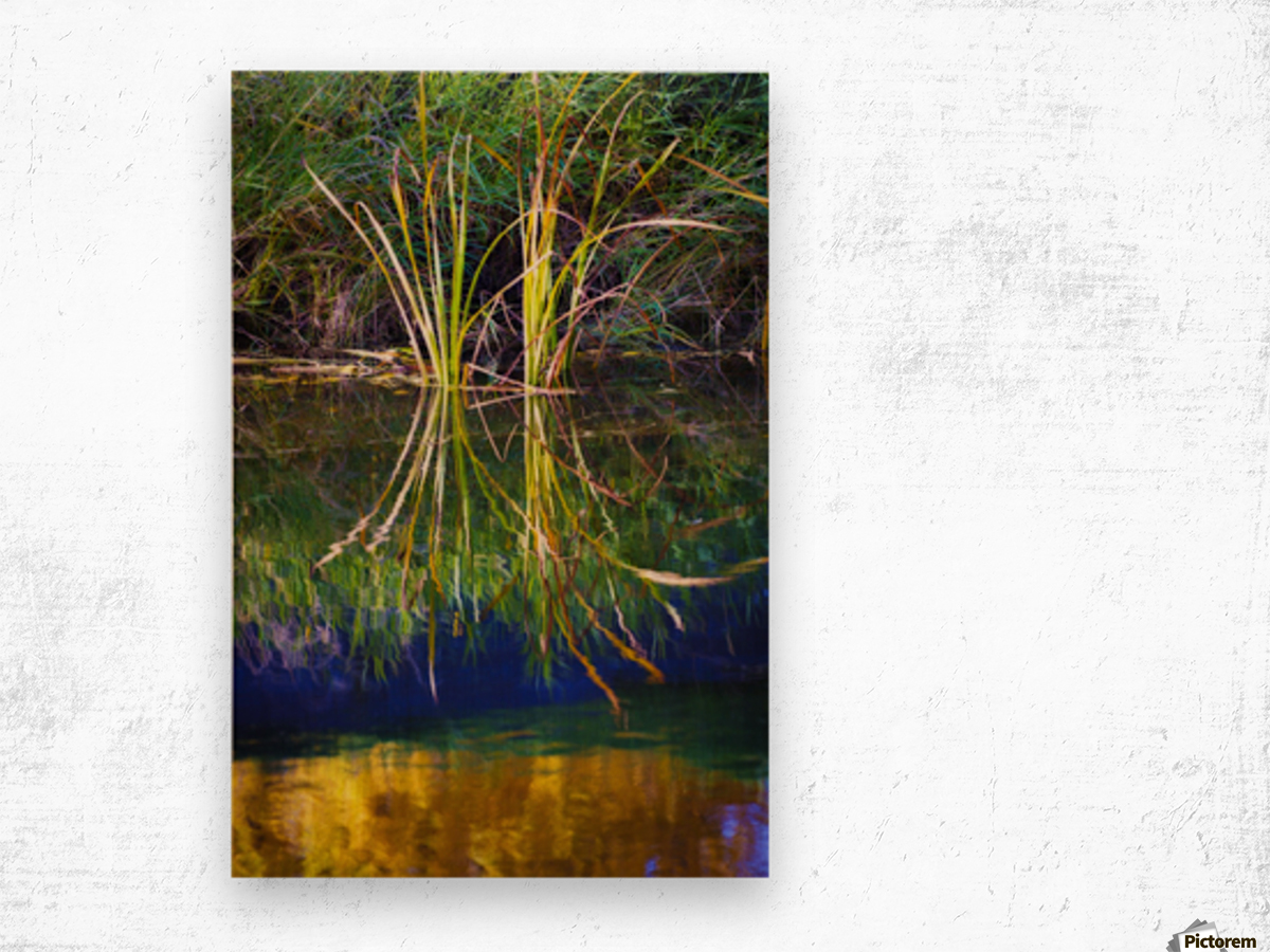Reeds Reflecting On The Water; St. Albert, Alberta, Canada Wood print