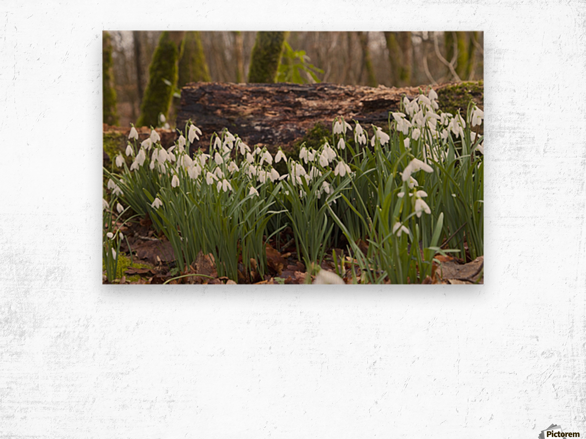 White Flowers Growing On A Forest Floor Beside A Fallen Tree; Dumfries, Scotland Wood print