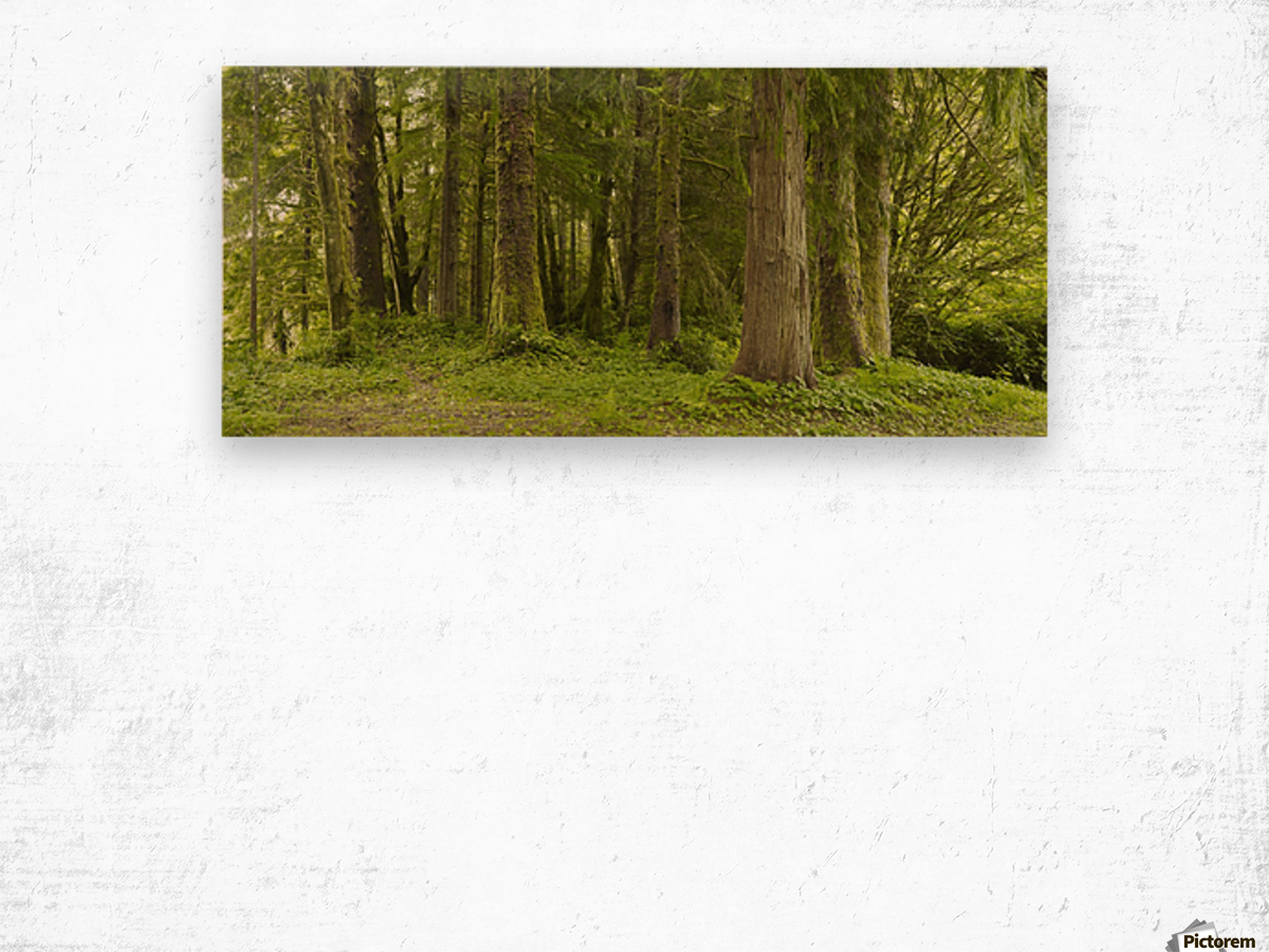 A Lush Forest; Tofino, British Columbia, Canada Wood print