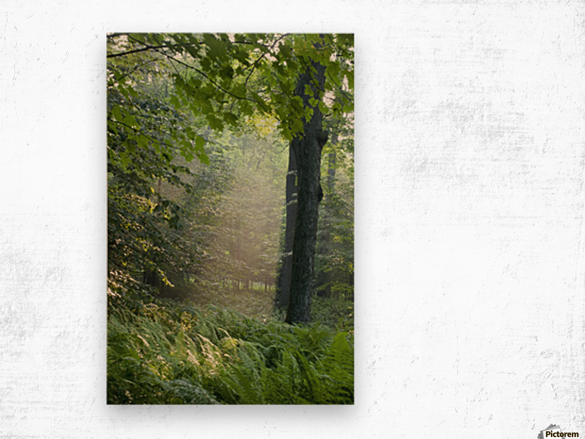 Trees In The Woods In The Early Morning Fog; Iron Hill, Quebec, Canada Wood print