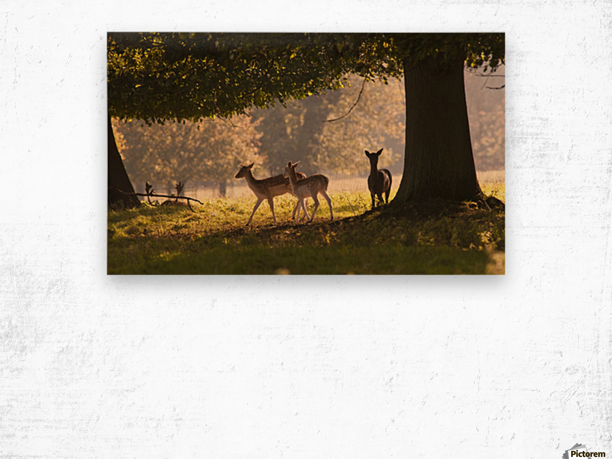 Deer Standing Under A Tree; North Yorkshire, England Wood print