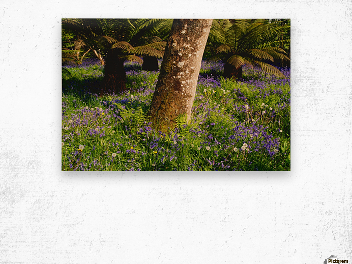 Mount Congreve Gardens; County Waterford, Ireland Wood print