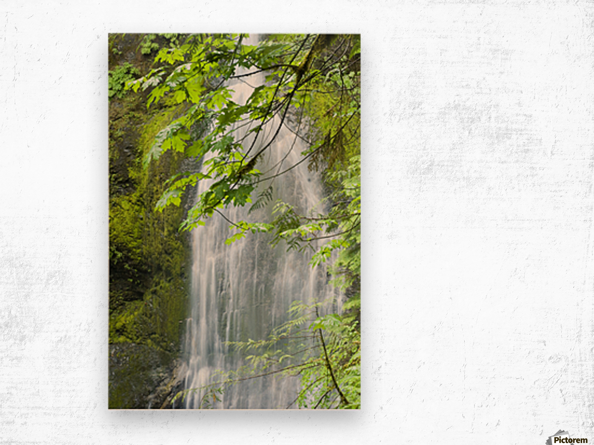 Marymere Falls, Olympic National Park Wood print