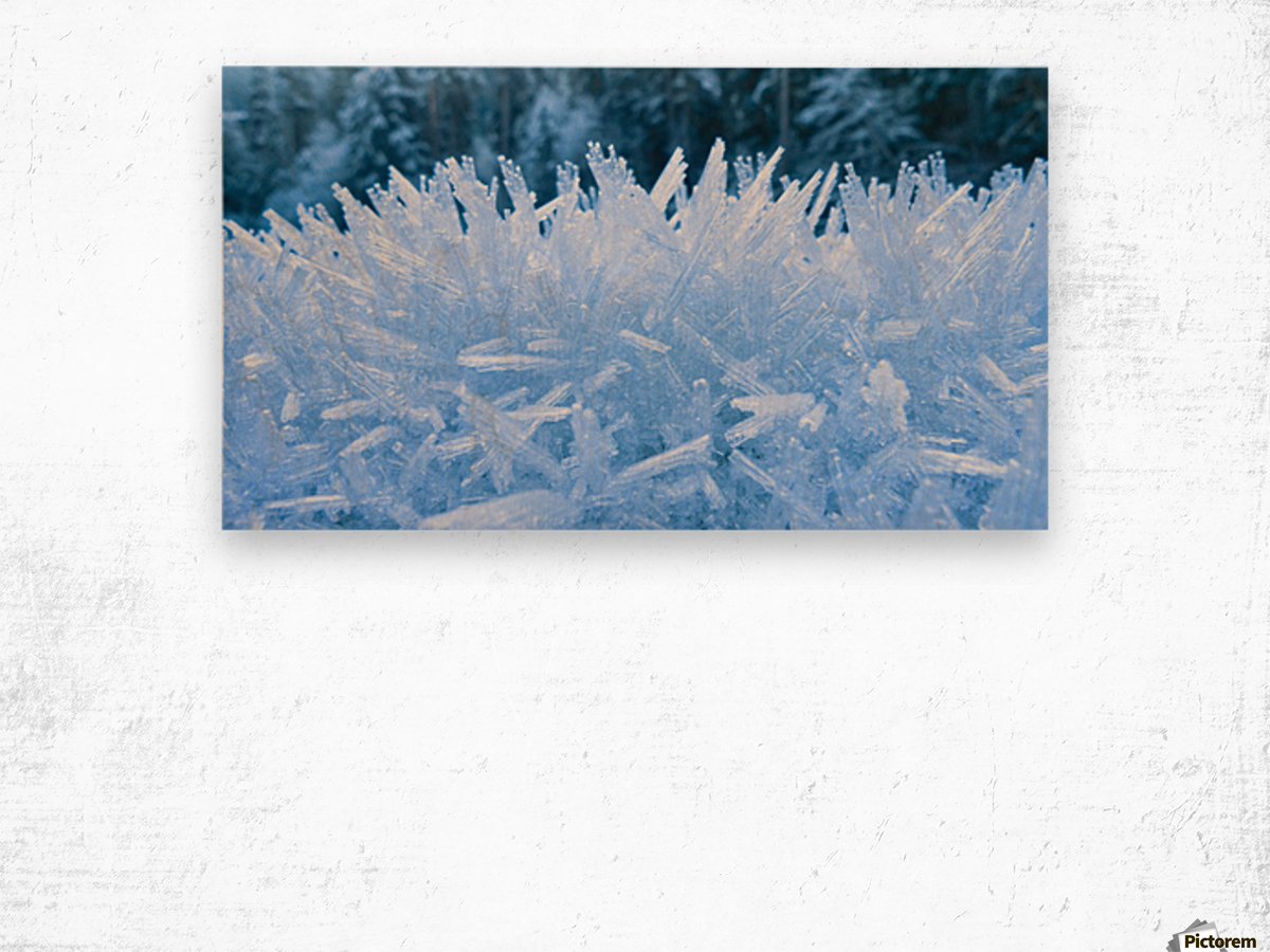 Close Up Of Hoar Frost Along The North Fork Of The Nooksak River During Winter, Mount Baker National Forest, Washington, Usa Wood print