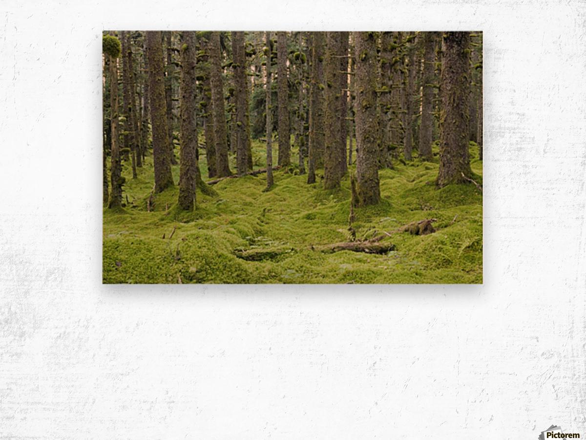 Spruce Forest & Moss Near Coast Kodiak Island Southwest Alaska Wood print