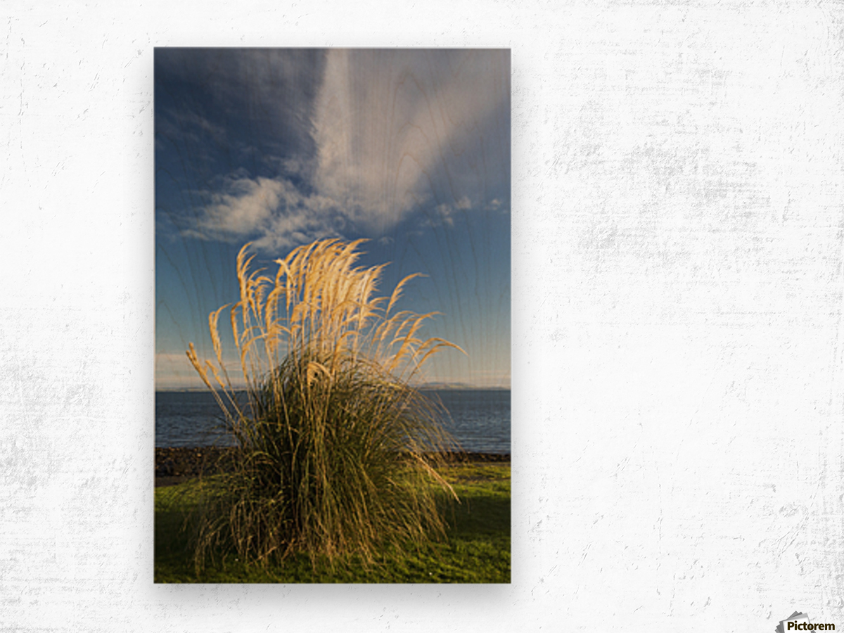 Tall grasses growing at the water's edge;Dumfries and galloway scotland Wood print