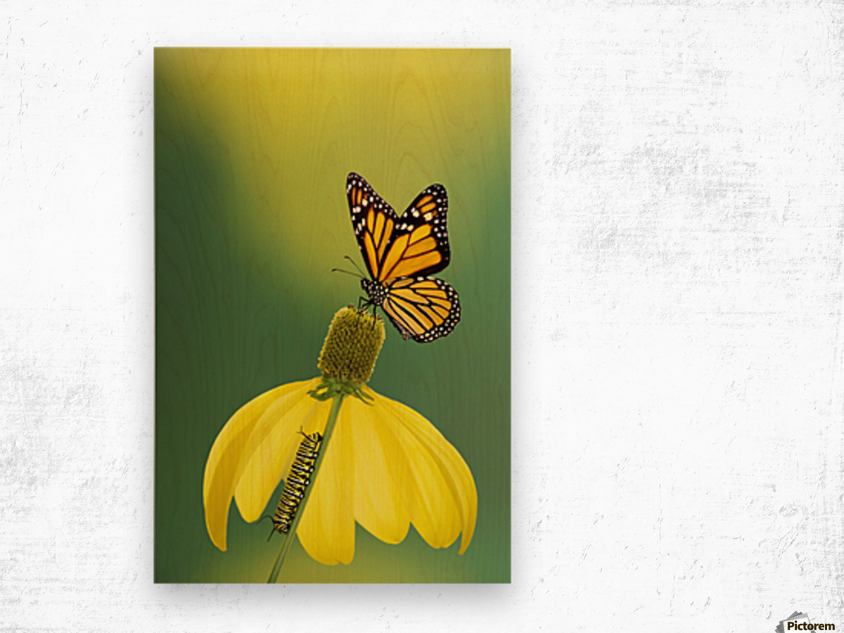 Caterpillar to butterfly;British columbia canada Wood print
