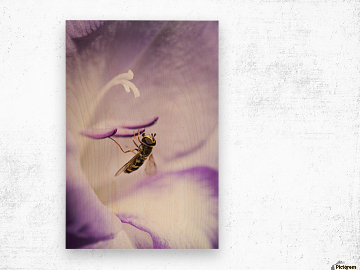 A Hoverfly Visits A Gladiolus Blossom; Astoria, Oregon, United States Of America Wood print