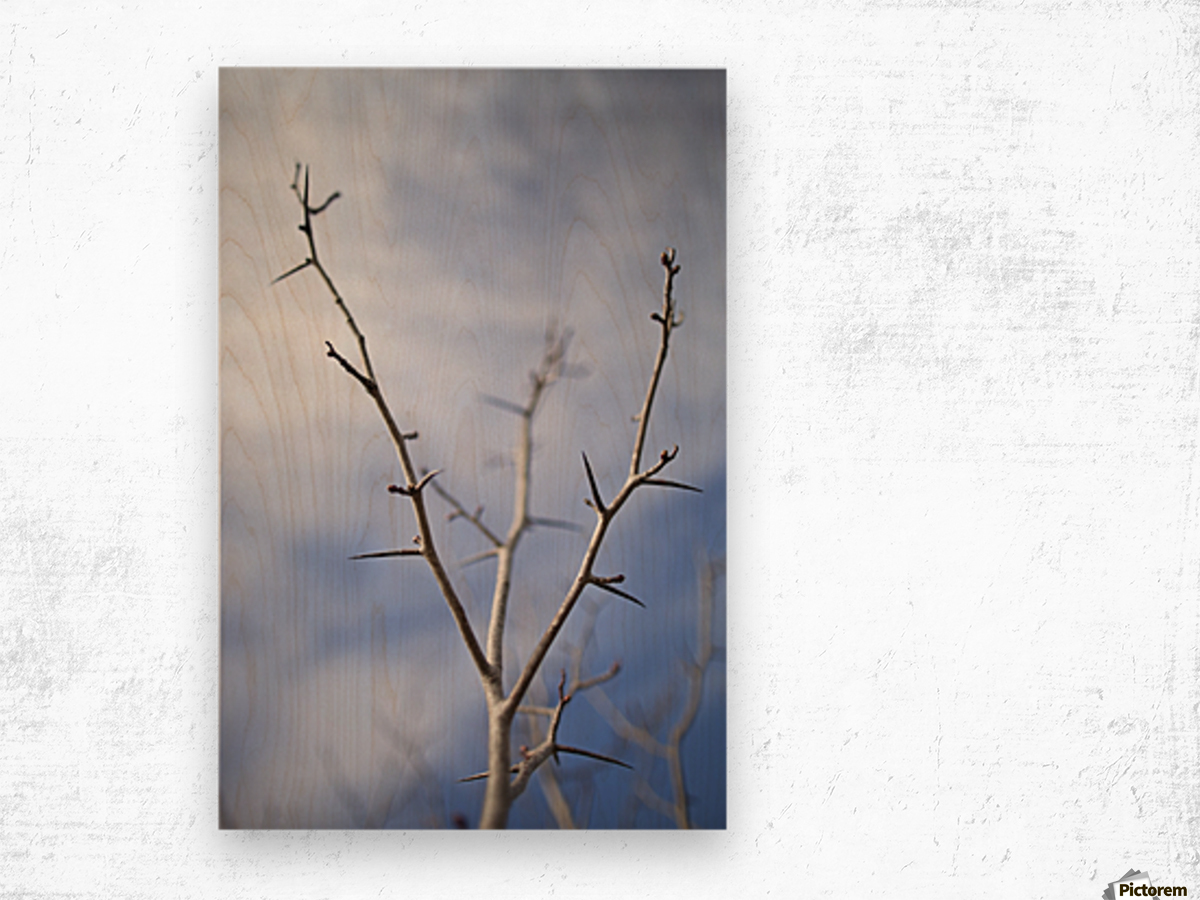 Tree with buds in springtime; Milton, Ontario, Canada Wood print