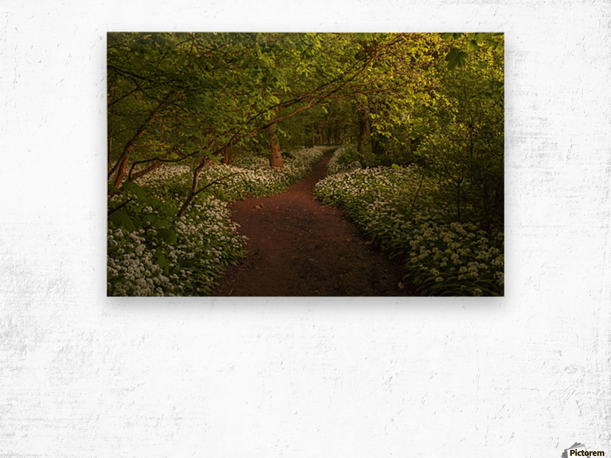 The Path to Fairytales, Ramsons Wood, Lancashire, UK Wood print
