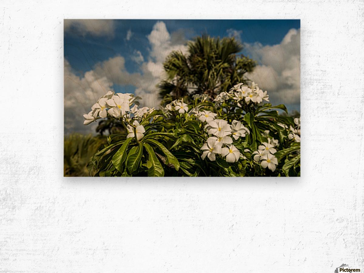 Frangipani Plumeria Rubra Hawaiian Lei Flower Antigua West