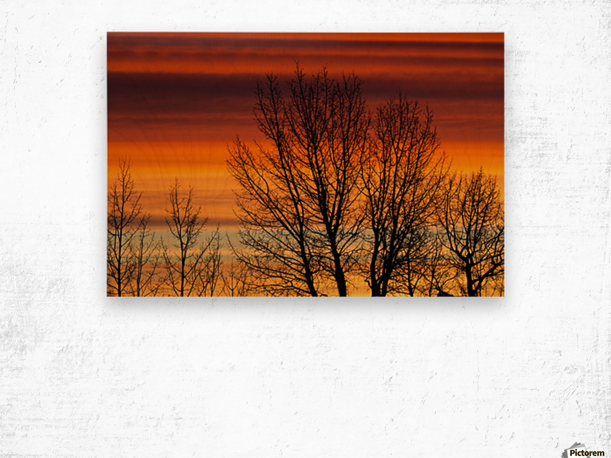 Silhouetted tree branches with dramatically colourful clouds at sunrise; Calgary, Alberta, Canada Wood print