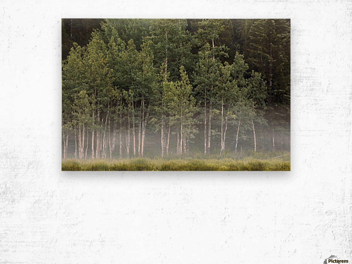 Fog covering a row of aspen trees in the early morning; Kananaskis Country, Alberta, Canada Wood print