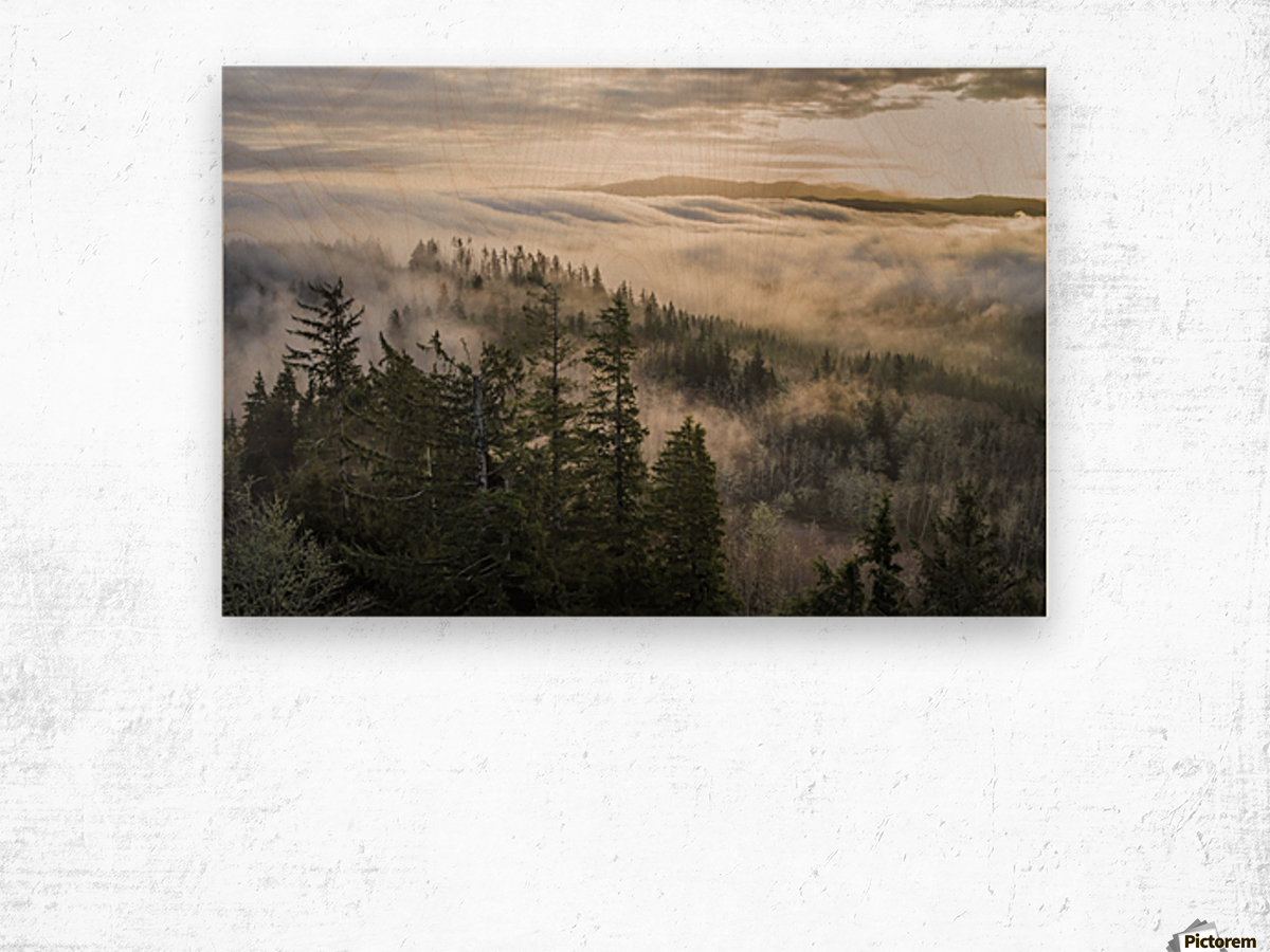 Fog and forest seen from Coxcomb Hill; Astoria, Oregon, United States of America Wood print