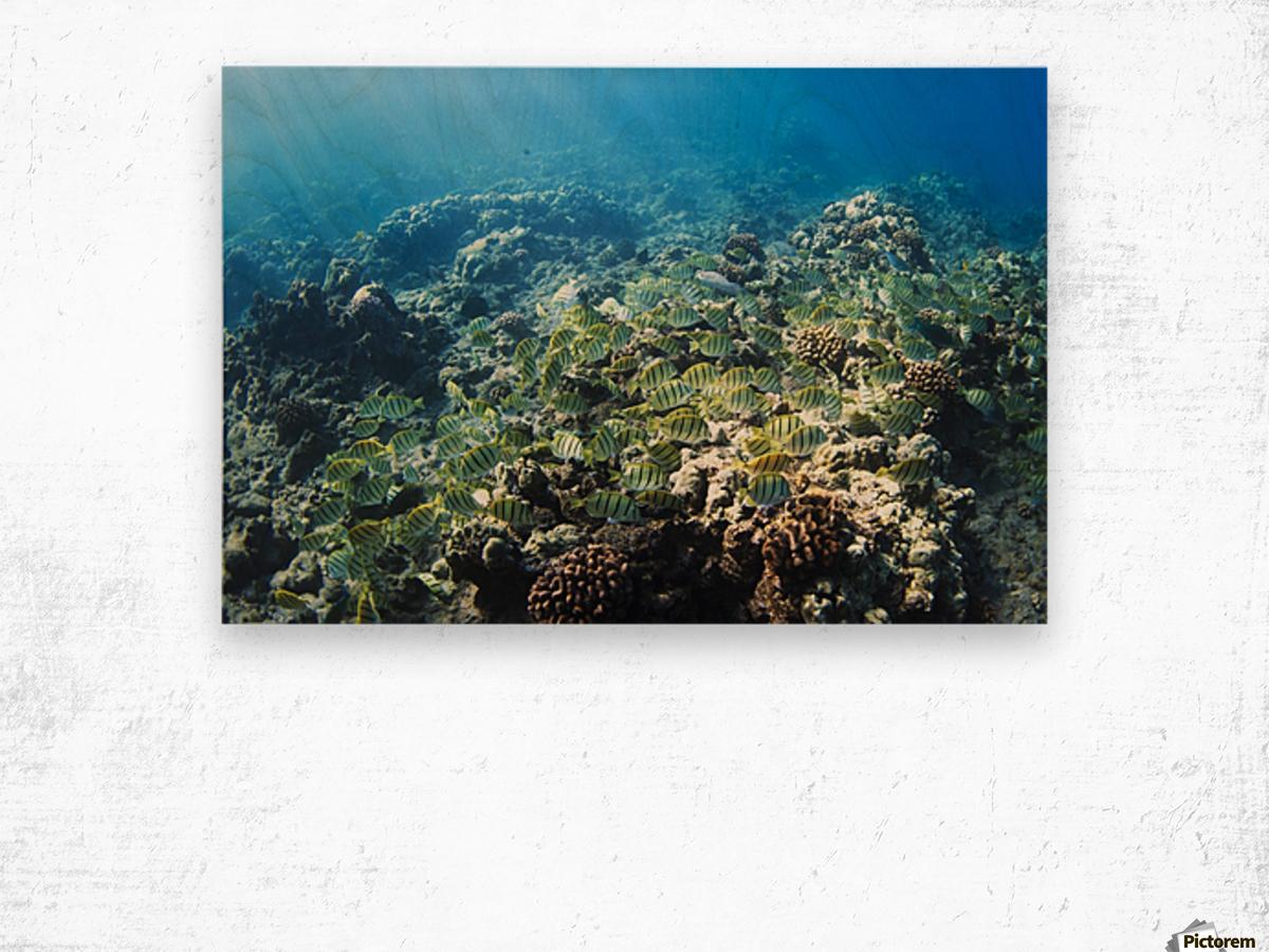 Tropical Reef in Hawaii- Wood print