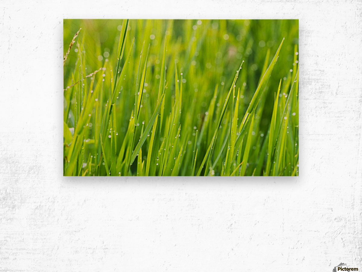 Close up of fresh grass with water drops in the early morning Wood print