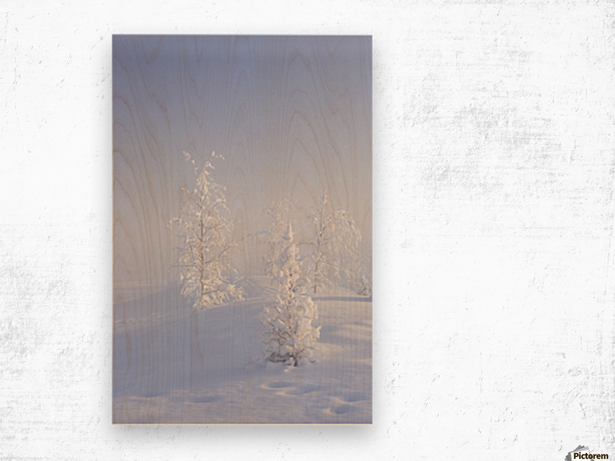 Scenic view of Birch trees in fog at sunrise, North Pole, Interior Alaska, Winter Wood print