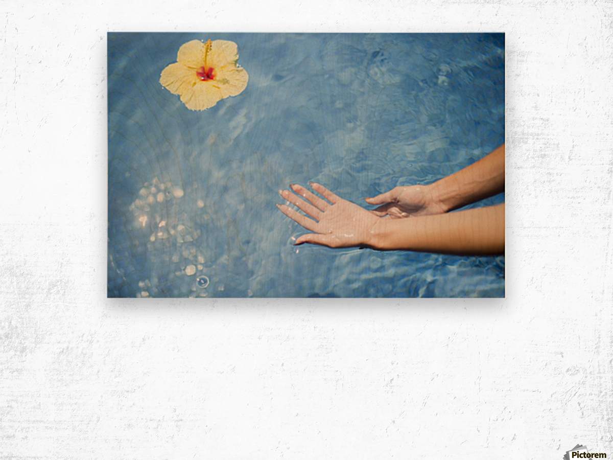 Dipping hands in the water with a floating flower; Island of Hawaii, Hawaii, United States of America Wood print