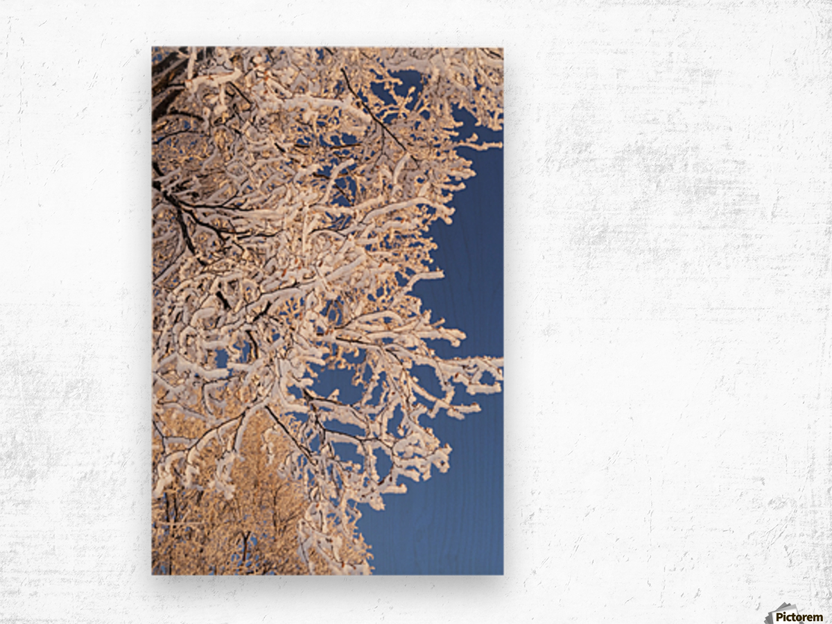 Hoar frosted tree branches against a blue sky; Anchorage, Alaska, United States of America Wood print