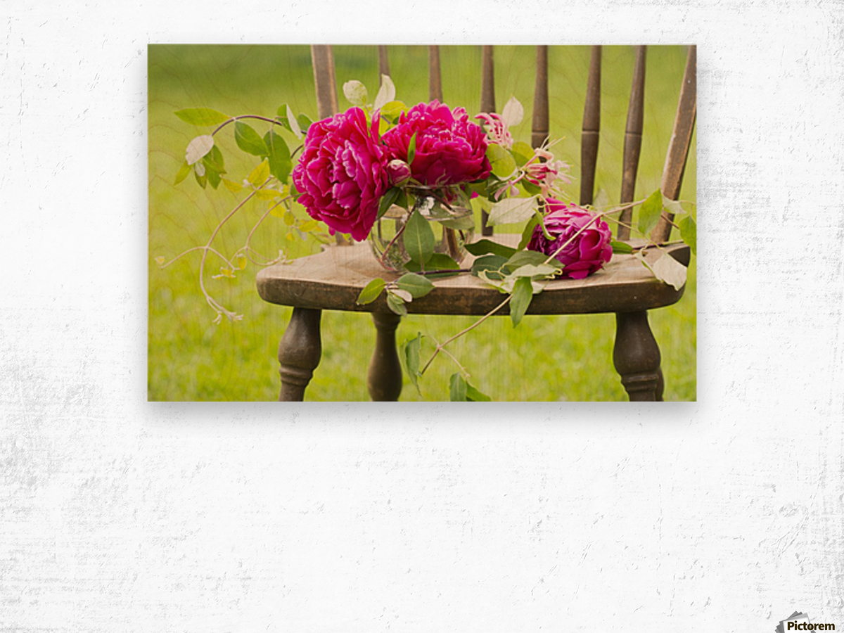 Fresh pink peonies picked and lying on a wooden chair; New Westminster, British Columbia, Canada Wood print