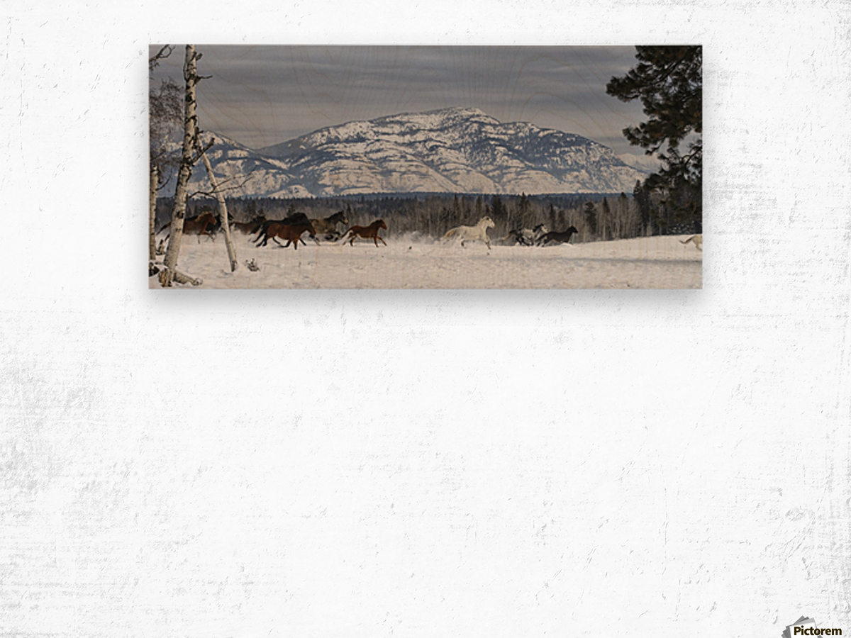 Horses running in the snow on a ranch in winter; Montana, United States of America Wood print