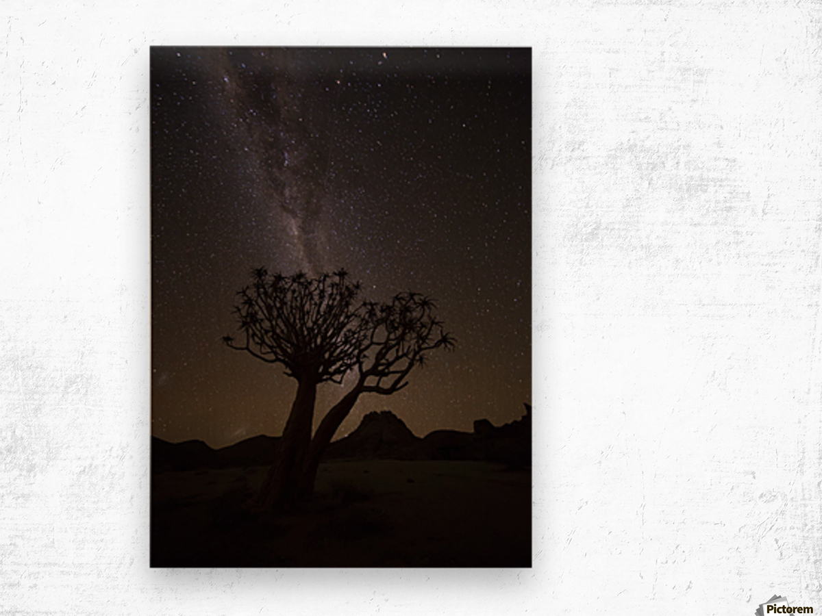 The milky way slashes across the night sky above a quiver tree (kokerboom, aloe dichotoma) in Richtersveld National Park; South Africa Wood print