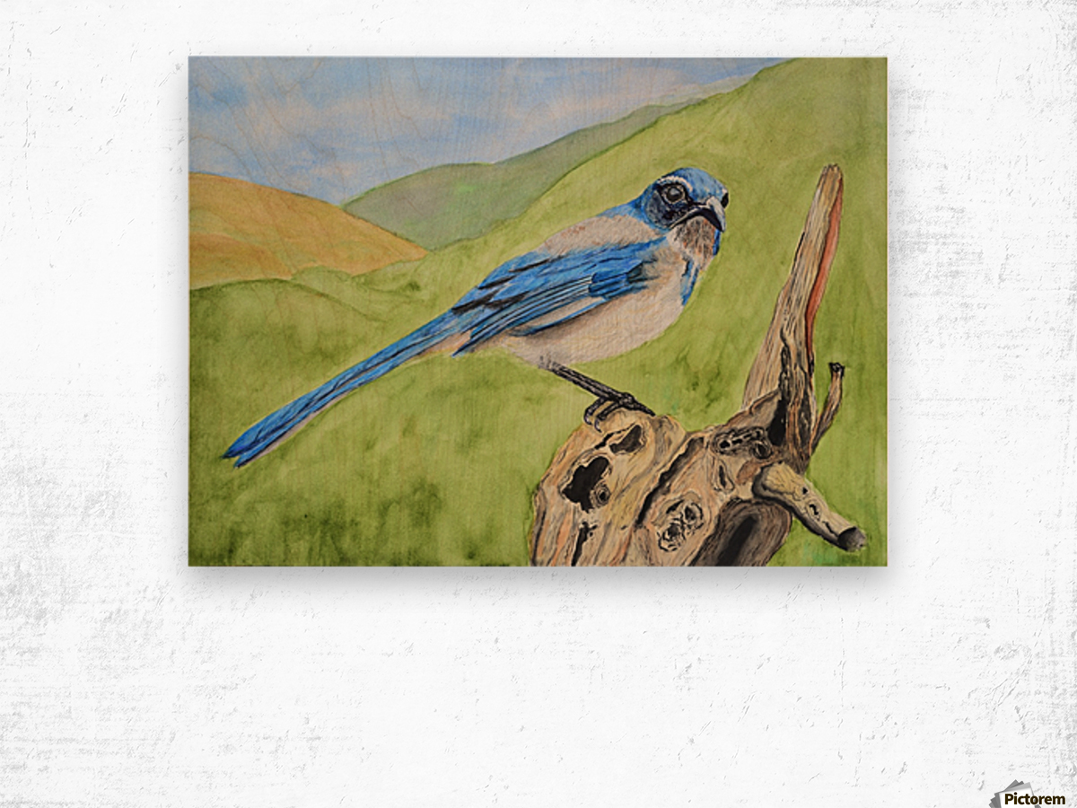 Blue Scrub Jay On Dead Tree Wood print