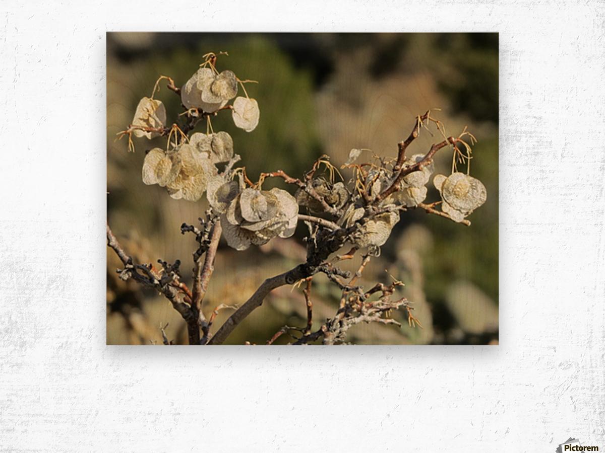 Weeds VP2 Wood print