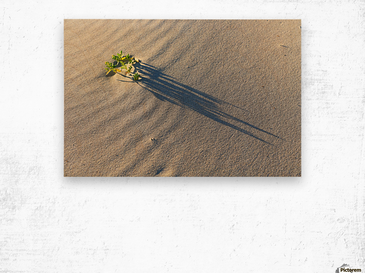 Evening Shadows on Dune Wood print