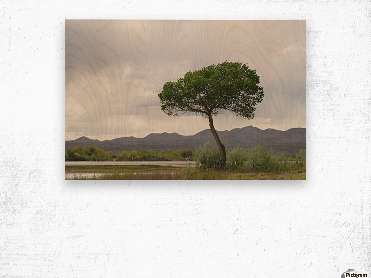 Tree at the Bosque de Apache Wildlife Sanctuary VP1 Wood print