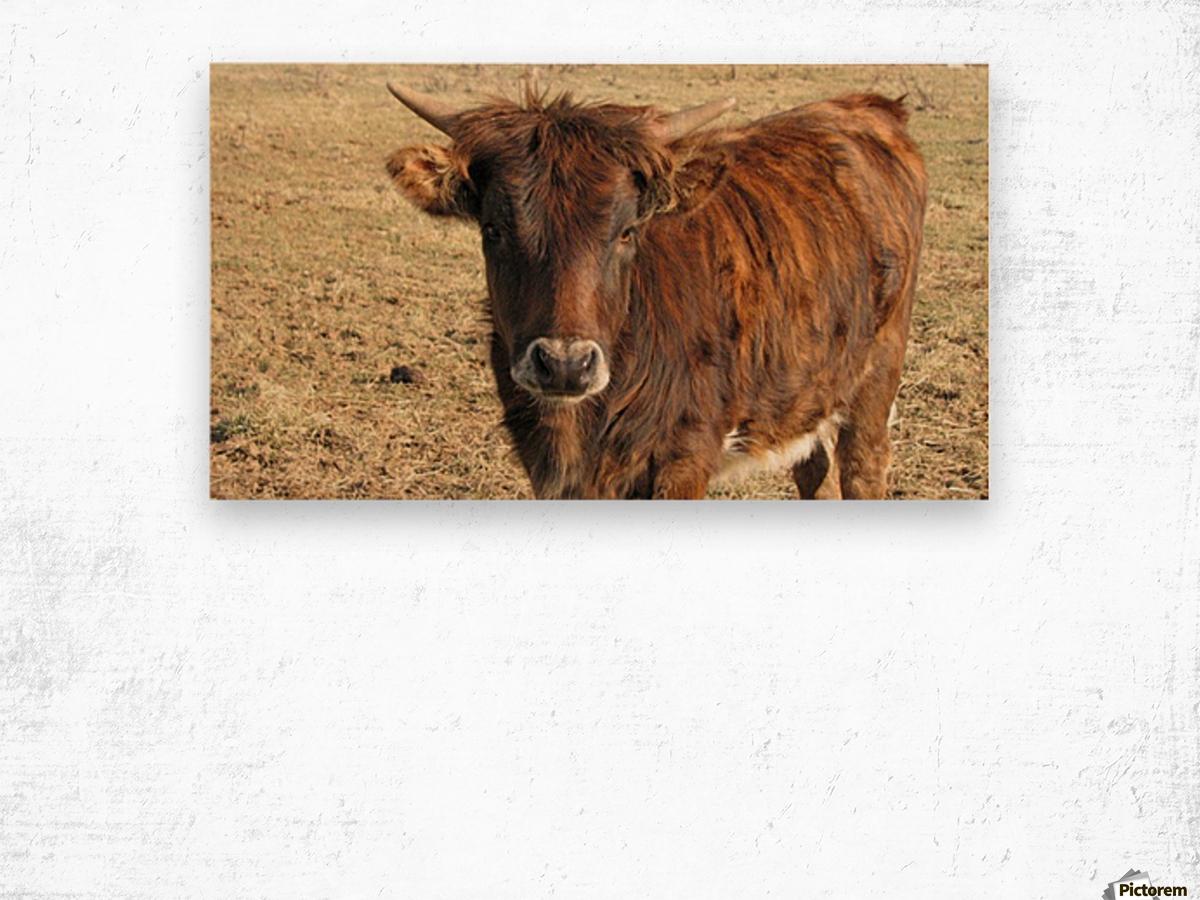 Bull in the Spring VP1 Wood print