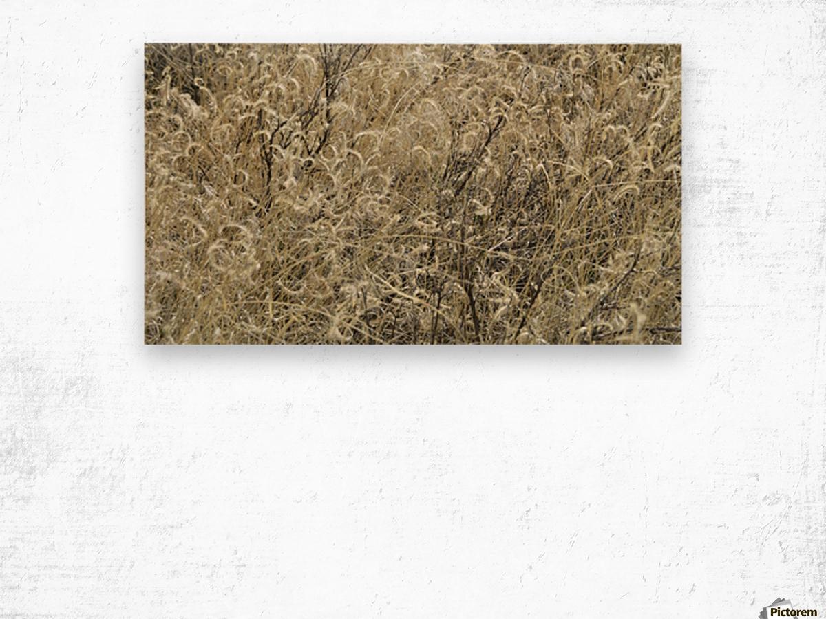 Wildflowers in the Sandia Mountains VP1 Wood print