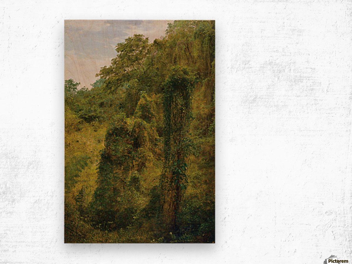 View of a forest in Jamaica Wood print