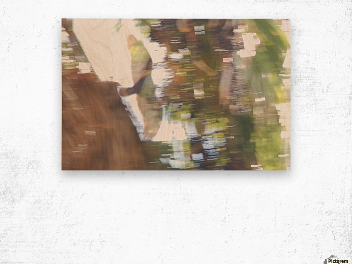 Bird of Prey In-Flight 1 Abstract Wood print