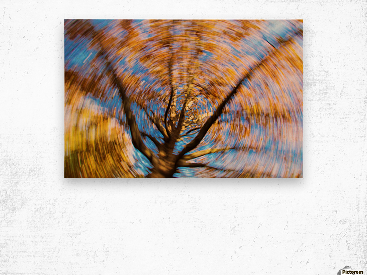 Autumn season in the middle of forest with colourful leaves Wood print