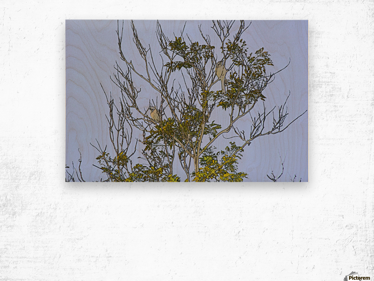 Two Blue Jays in Tree 2 abstract Wood print
