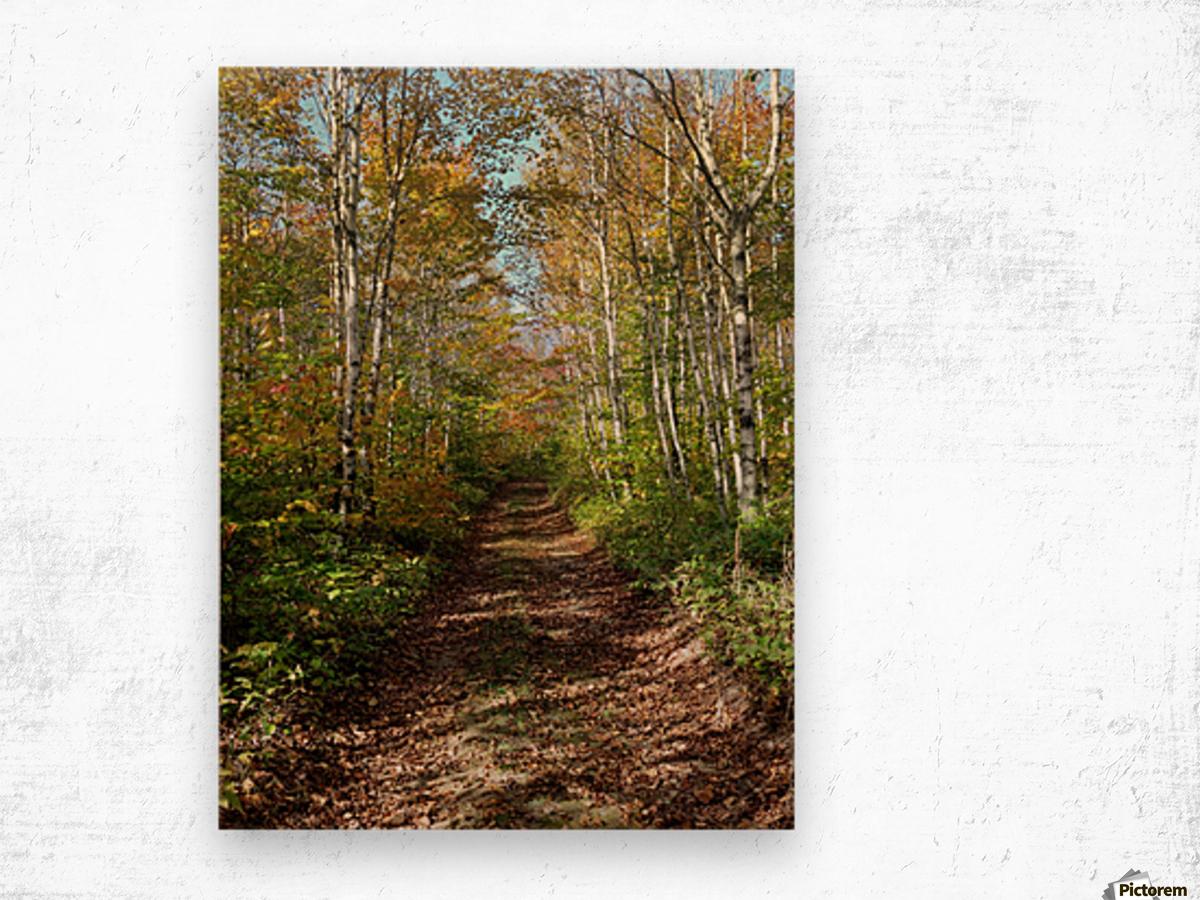 Fall foliage, Mount Pisgah, NB, Oct. 6, 2013 Wood print