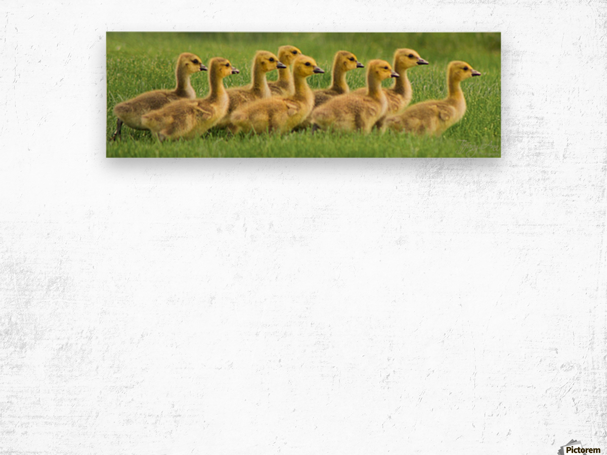 Get Your Geese in a Row Wood print