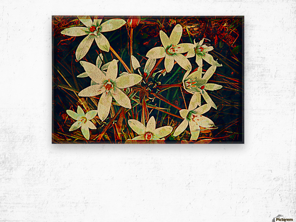 WhiteDarkWallflowers Wood print