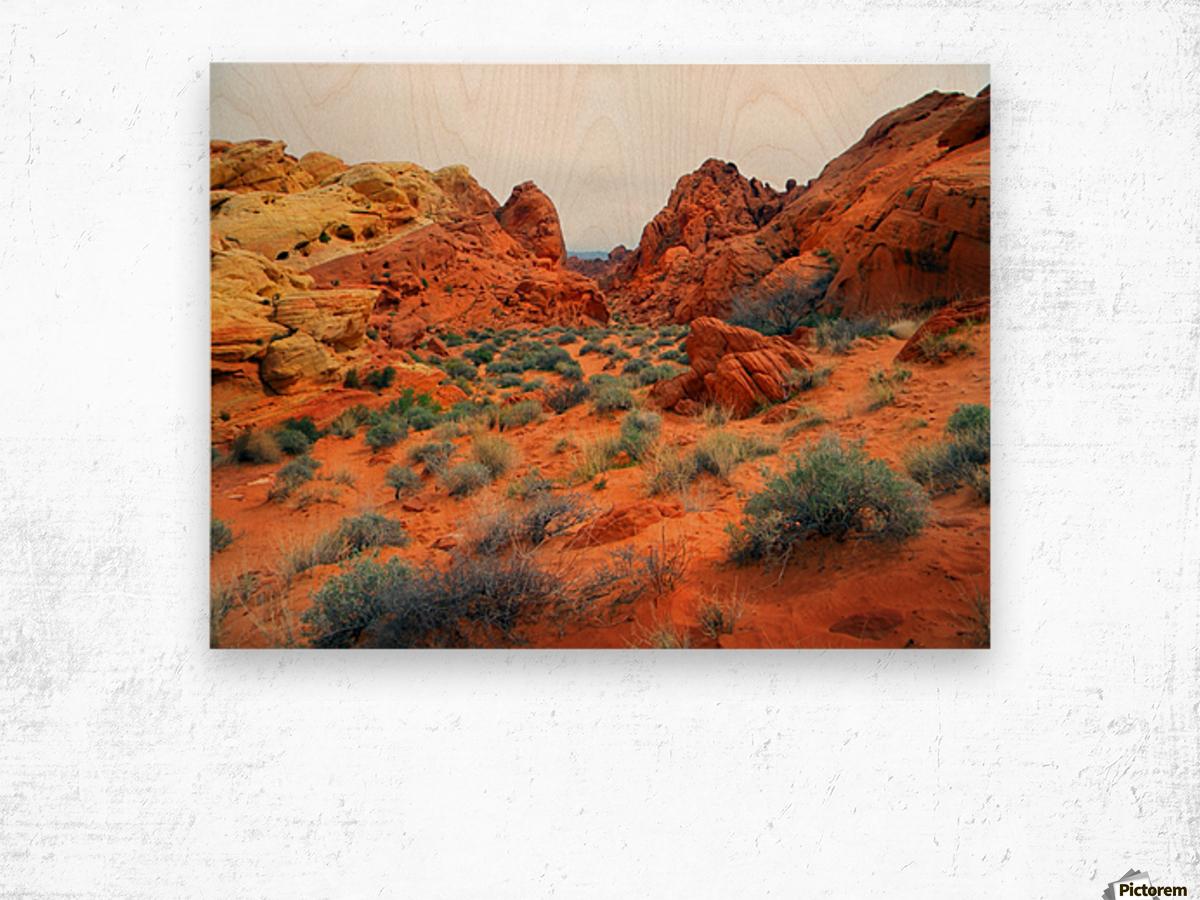 Desert Colors Wood print