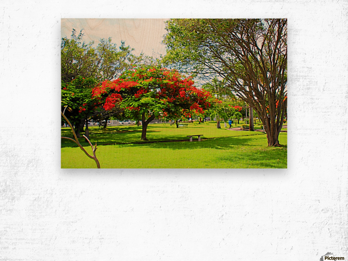 St Kitts Independence Square 6 Wood print
