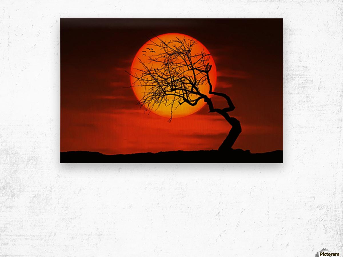 Bird on Sun Wood print