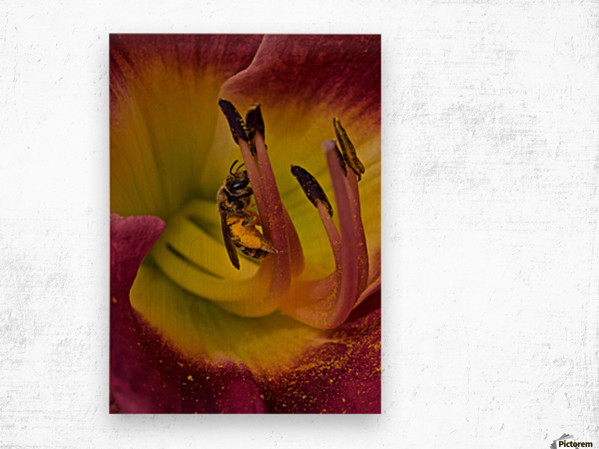Bee Inside Corn Lily - Portrait Wood print