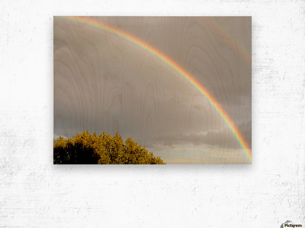 Landscape, photography - Double rainbow on Roman sky with tree - The Roman landscape, Rome, Italy, photography Wood print