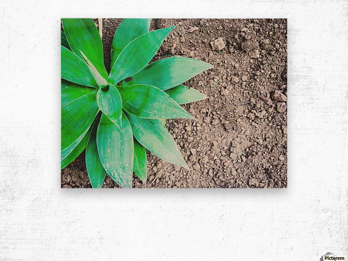 green leaf plant with sand background Wood print